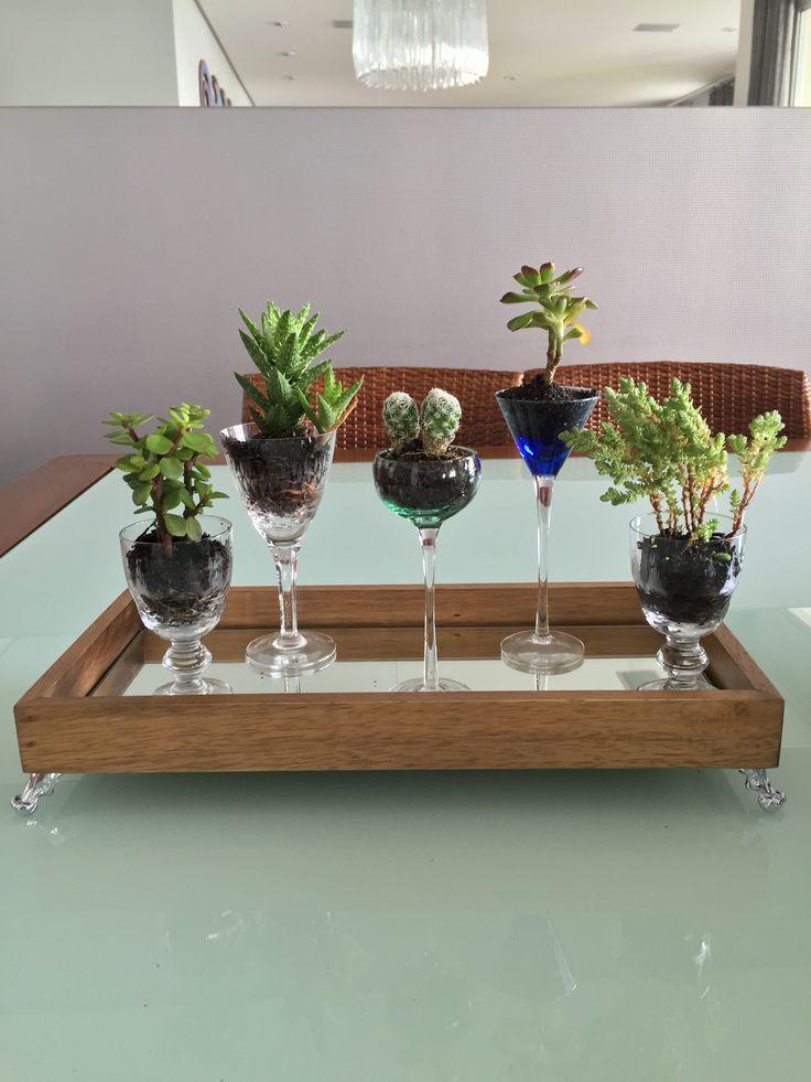 Suculentas e cactos em ta as de licor jardim pinterest - Plantas para terrarios ...