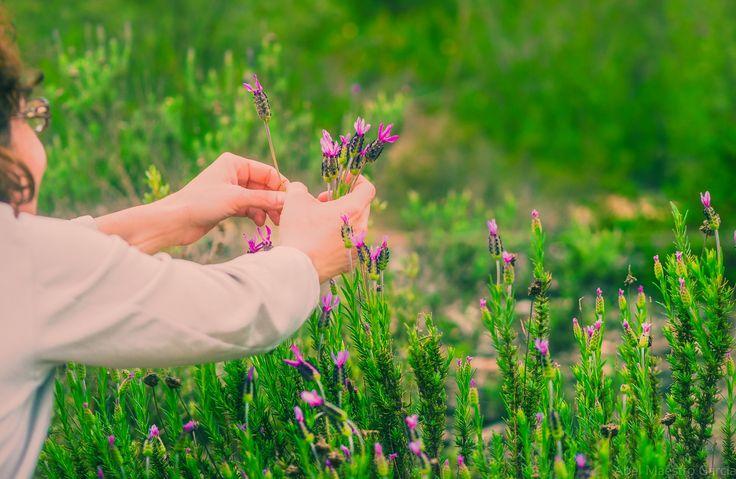 Spring arrives - y la naturaleza floreció ¿Quien puede evitarlo? - And nature blossomed. Who can help it?