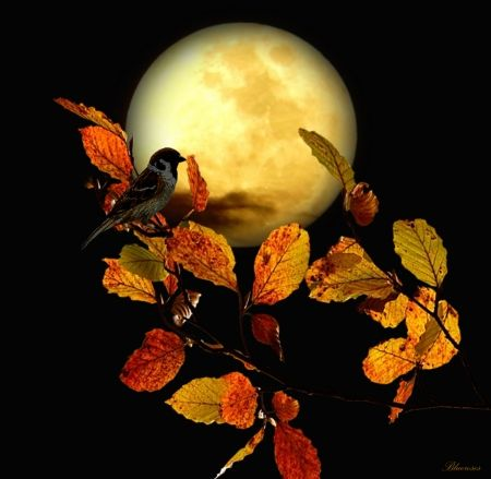 *Goodnight* - full, bird, shadow, moon, night, autumn, goodnight, sparrow, little, fall, yellow, tree branch, hq, moonlight, season, leaves