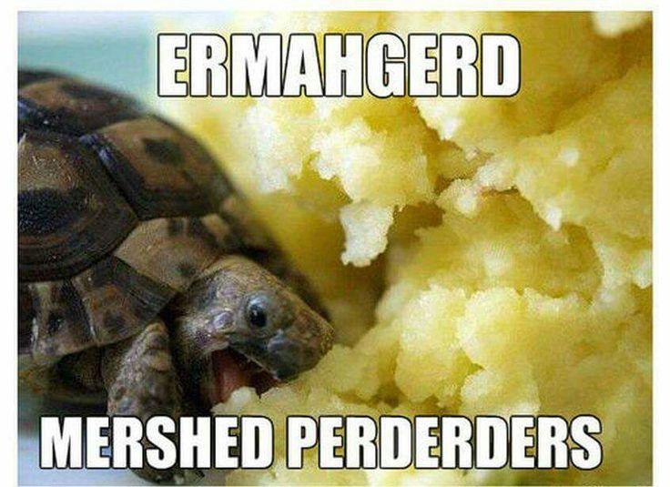 0ed6898530ec09172c25ad3918140edc giant food mashed potatoes 11 best tortoise memes images on pinterest funny animals, funny
