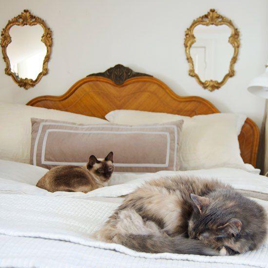 17 Best Ideas About Cat Pee On Pinterest