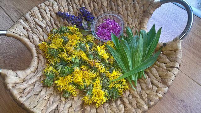 ZA MĚSTEM U LESA: Zahradní sirup