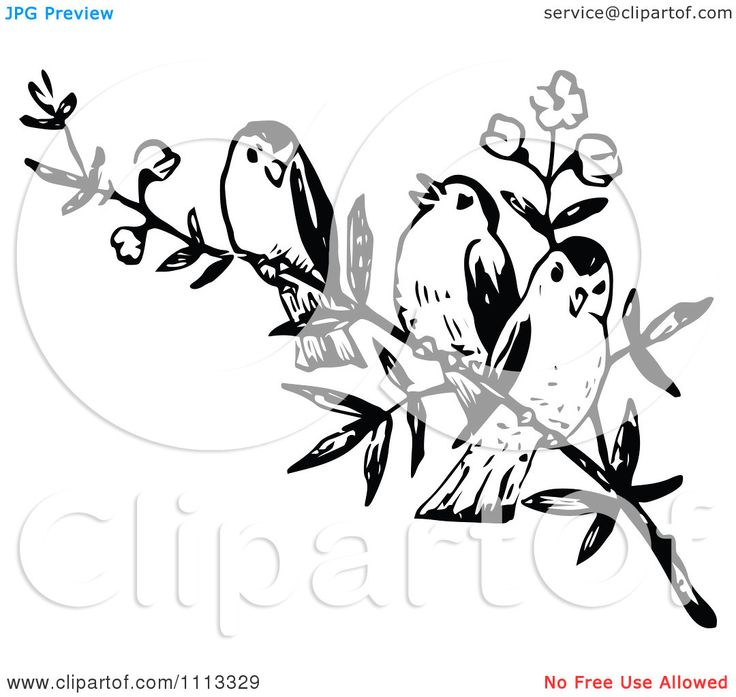 Clipart Three Vintage Black And White Birds On A Branch - Royalty ...