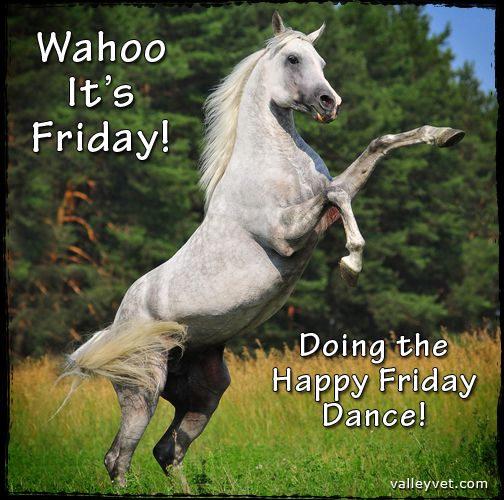 Wahoo it's Friday! Doing the Happy Friday dance! | Horse ...