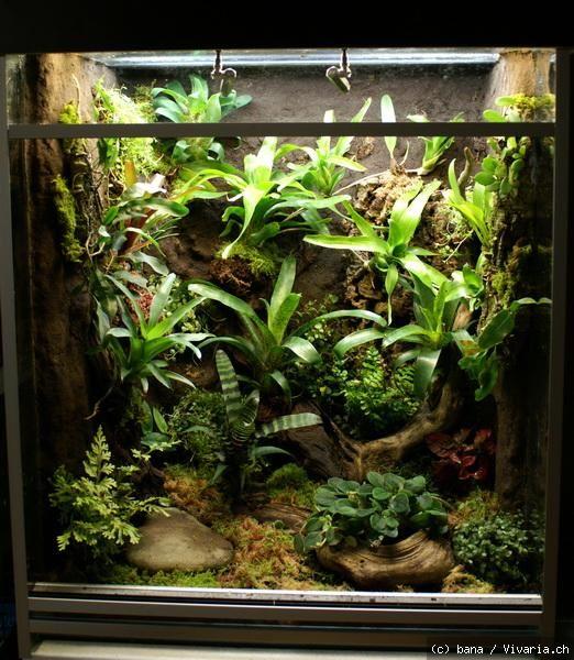 192 best images about froggie chameleon on pinterest salamanders crested gecko and dart frogs. Black Bedroom Furniture Sets. Home Design Ideas