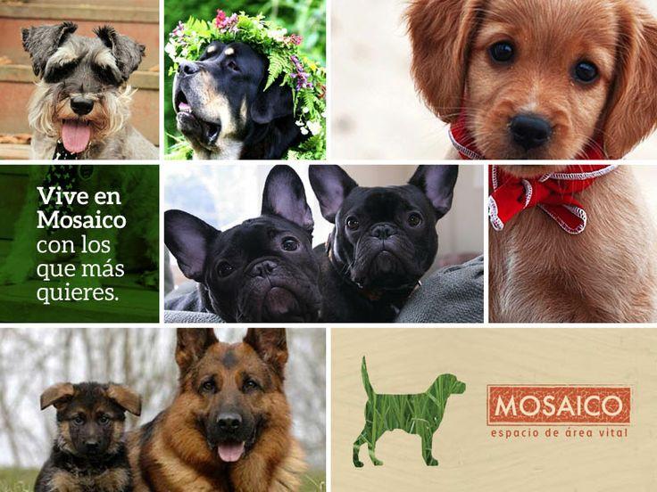 ¿Sabías que existe un perro ideal según tu personalidad?  http://hogartotal.imujer.com/5775/cual-e s-tu-perro-ideal-segun-tu-personalidad
