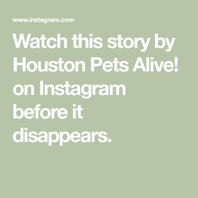 Watch This Story By Houston Pets Alive On Instagram Before It Disappears Instagram Pets Houston