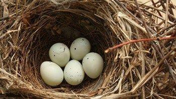 Γιατί τα πουλιά βάζουν αποτσίγαρα στις φωλιές τους;   Μπορεί τα τσιγάρα να είναι βλαβερά ωστόσο τα τοξικά συστατικά τους βρίσκουν... from ΡΟΗ ΕΙΔΗΣΕΩΝ enikos.gr http://ift.tt/2sQyhaz ΡΟΗ ΕΙΔΗΣΕΩΝ enikos.gr