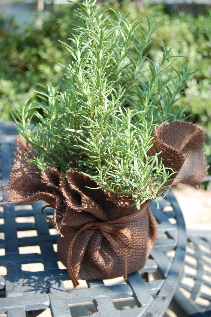 plants-for-wedding-souvenir-ideas.jpg (1064×1600)