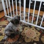 DIY Indoor Pet Ramp - My Repurposed Life™