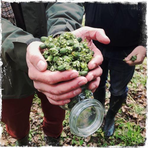 L'asbl namuroise Cuisine sauvage vient de lancer un nouveau site très utile pour la cueillette de plantes sauvages... Petite balade en forêt avec son animateur Lionel Raway...