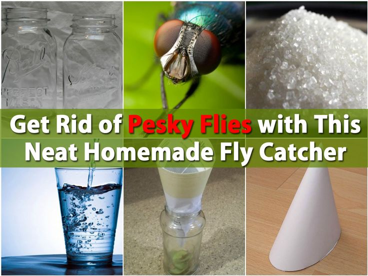 how to kill flies without spray