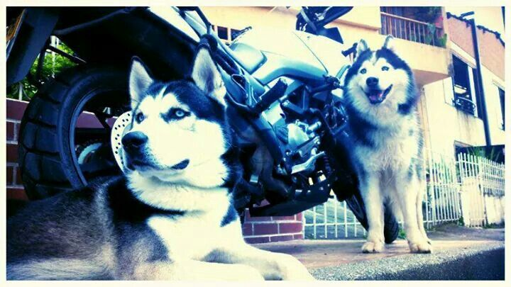 Yako & Rocko