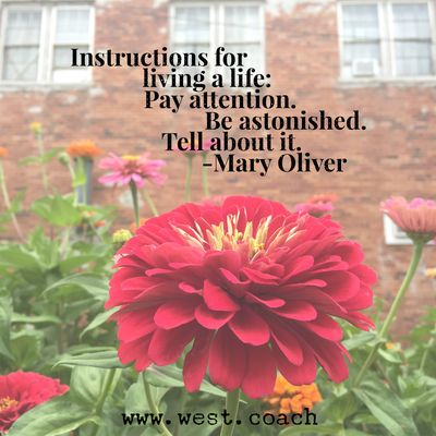 INSPIRATION - EILEEN WEST LIFE COACH | Instructions for living a life: Pay Attention. Be Astonished. Tell about it. - Mary Oliver | Eileen West Life Coach, Life Coach, inspiration, inspirational quotes, motivation, motivational quotes, quotes, daily quotes, self improvement, personal growth, instructions, pay attention, be astonished, tell about it, Mary Oliver, Mary Oliver quotes.