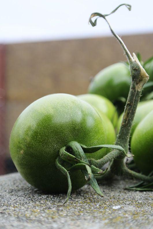 Tomatoes! - Martin Kříž - Google+