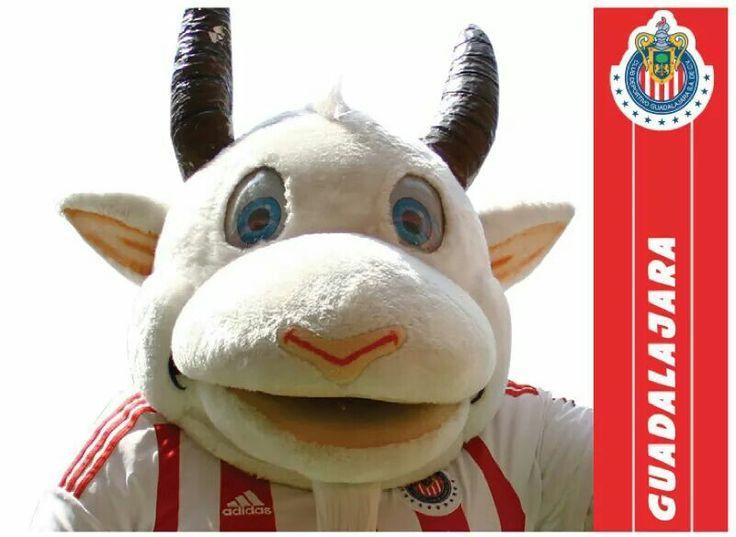 Mascota de fútbol (FEMEX) de las chivas rayadas del Guadalajara (soy Águila pero la mascota no tiene la culpa de haber nacido chiva ;) )