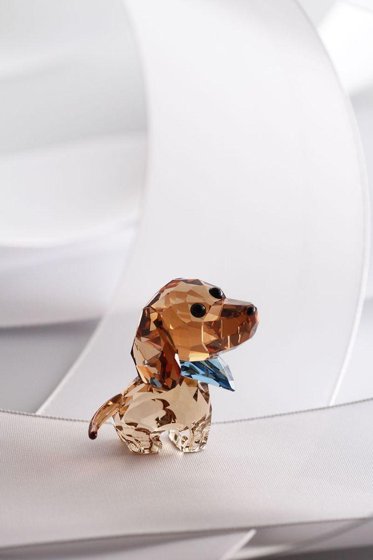 best images about limo love on pinterest  weenie dogs  - swarovski puppy milo the dachshund