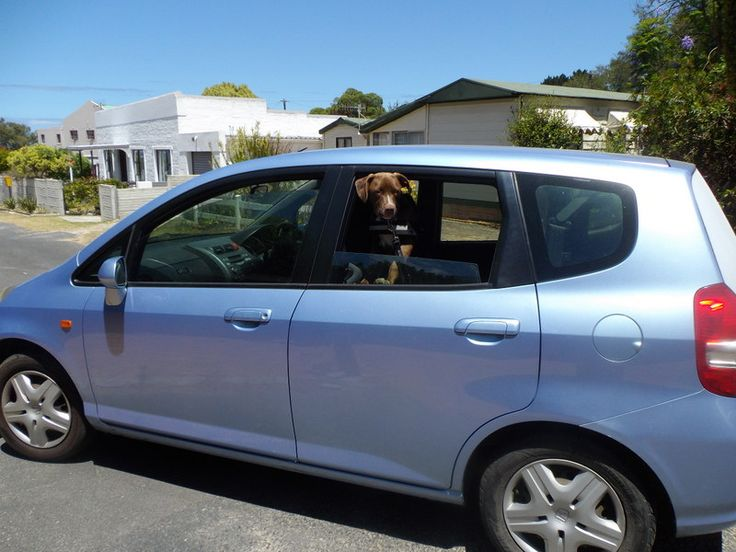 Zsa Zsa says she loves driving around in a Honda Jazz https://www.facebook.com/pages/Zsa-Zsa-the-Rescue-Pitbull/742159279166031