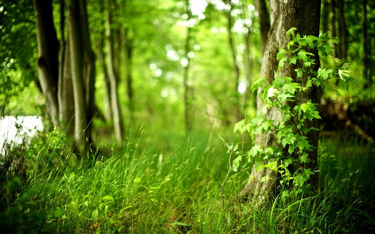 nature-beautiful-wallpapers-forest-fresh-air-cleanliness-trees-plants-foliage-fresh-grass.jpg (1920×1200)