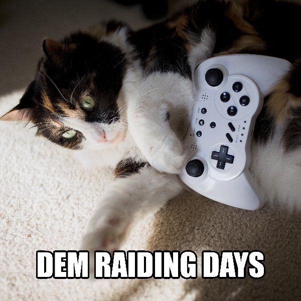 I'll join your guild. Search for me at your local RSPCA Queensland shelter. We're bursting at the seams and we need your help! All adult cats for just $50 until June 19.  http://www.rspcaqld.org.au/adopt RSPCAQLD #AdoptMeow #Cat #Gamer #PlayWithMe