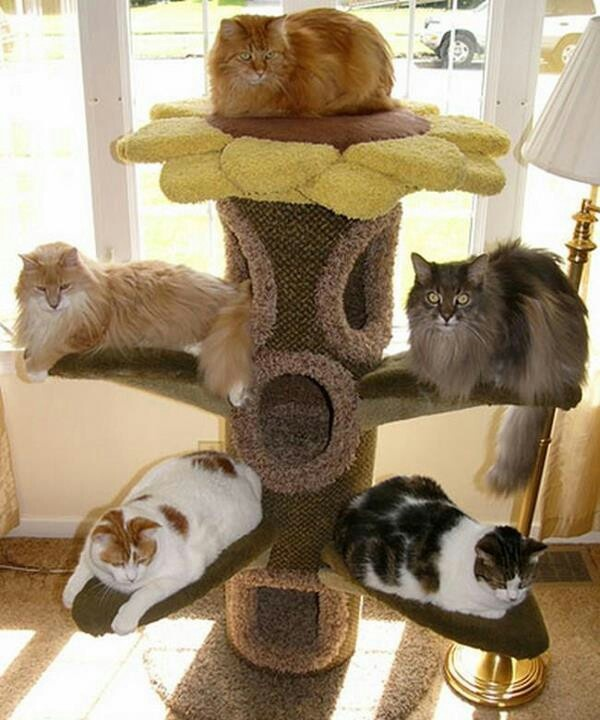 Love the cat tree