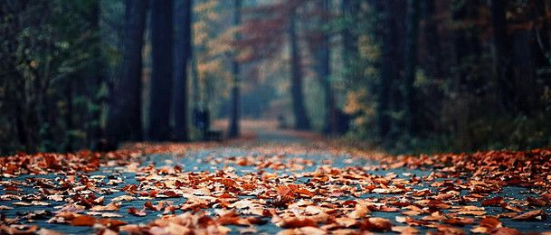 Fall Season Desktop Wallpaper Hd Autumn Forest Background Banner Cover Photos Twitter