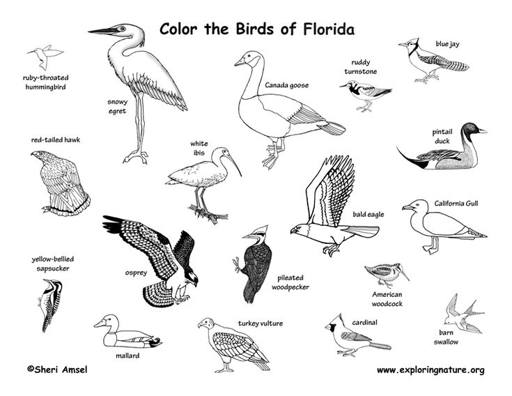 Florida Animal Habitats Bird Coloring Pages Habitats