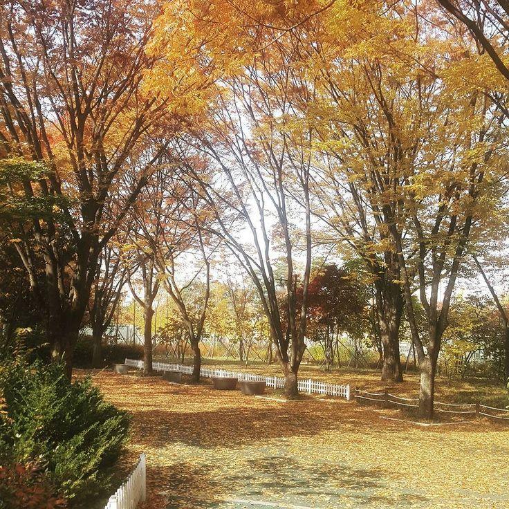 Fall is passing  #fall #leaf #memory # Jamsil #seoul