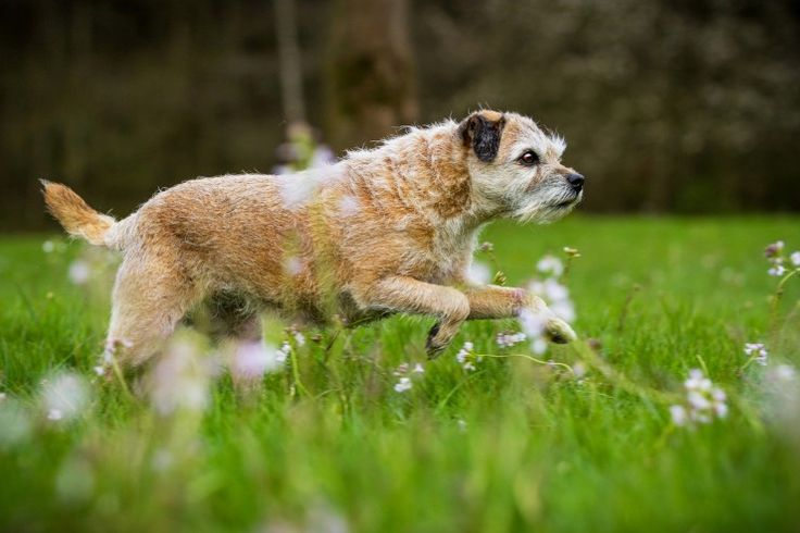 Side effects of NSAID arthritis medications for dogs | Pets4Homes
