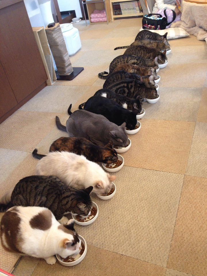 CAT CAFE  Japan has cat cafes where people can come get some tea and pet the cats, very popular.