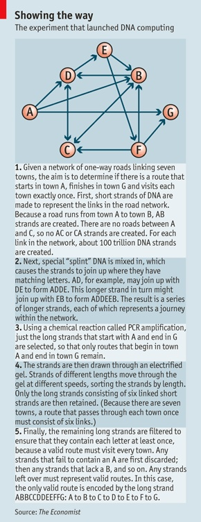 The experiment that launched DNA computing.