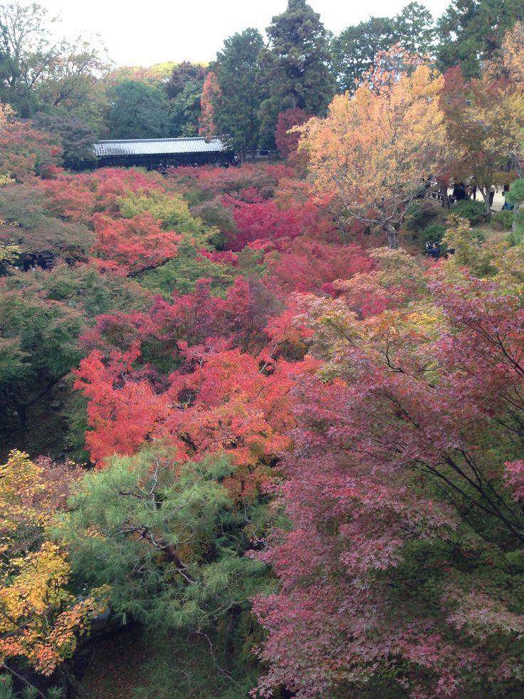 kyoto toufukuji