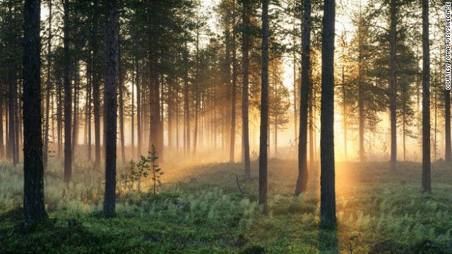 The dim pinkish light of the midnight sun in the forest of Paksuniemi, north Sweden. The midnight sun is a natural phenomenon occurring in summer months at latitudes north of the Arctic Circle, where the sun remains visible 24 hours a day.