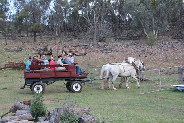 The draught horse cart takes visitors for a ride on Sally Bray's Blue Mountains farmstay tours.