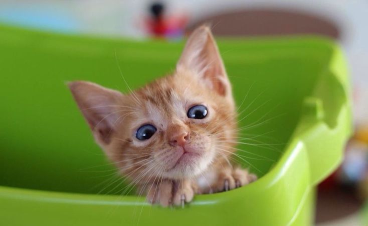 How do you correctyour cat improper behaviour when she is doing something bad?Though every cat is unique and may have specific issues or specific bad behaviors. Remember to always keepourhuman emotions in check.   #Cat behaviour #Cat training