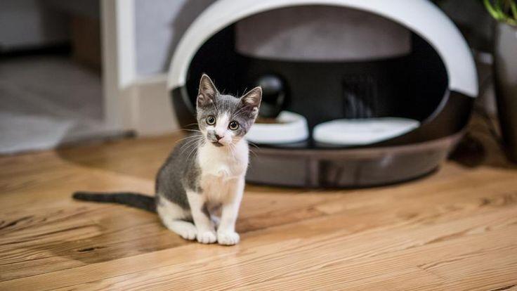Una start-up di Tolosa ha sviluppato un distributore di acqua e crocchette collegato ad un'app per monitorare la nutrizione dei gatti affamati