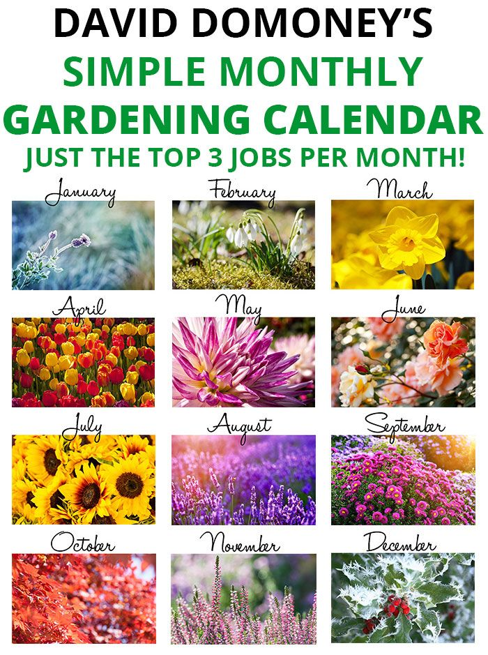 Get on top of your garden with an easy gardening calendar!  3 jobs per month - no more! David Domoney's Simple Monthly Gardening Calendar has just the top 3 jobs per month!