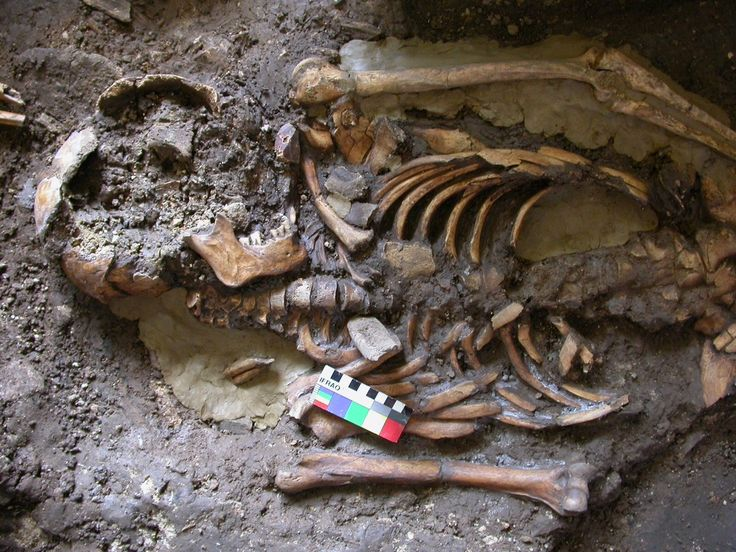 A small group of peopleseparated from the rest of humanity for more than 10,000 years went on to makea major contribution to European and Indian genetics. The previously unrecognized inhabitants oftheCaucasus region have been identified from a study of an ancient bone and tooth with intact DNA found in Georgian caves.