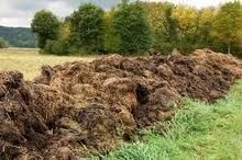 Animal manure may fuel Iowa's next biofuel industry surge biofuel biofuelschat