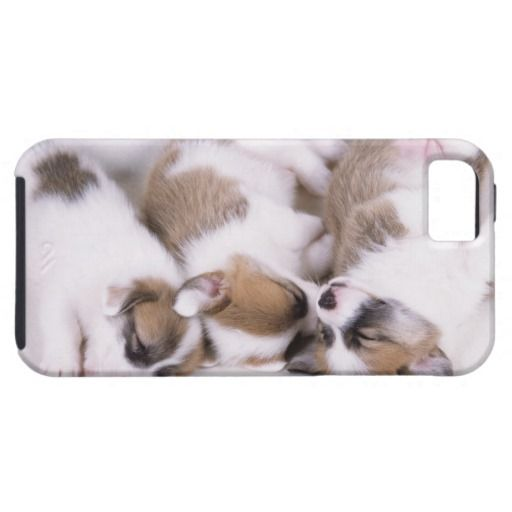 >>>Coupon Code          Sleeping welsh corgi puppies iPhone 5 covers           Sleeping welsh corgi puppies iPhone 5 covers lowest price for you. In addition you can compare price with another store and read helpful reviews. BuyReview          Sleeping welsh corgi puppies iPhone 5 covers Re...Cleck Hot Deals >>> http://www.zazzle.com/sleeping_welsh_corgi_puppies_iphone_5_covers-179345609667739281?rf=238627982471231924&zbar=1&tc=terrest