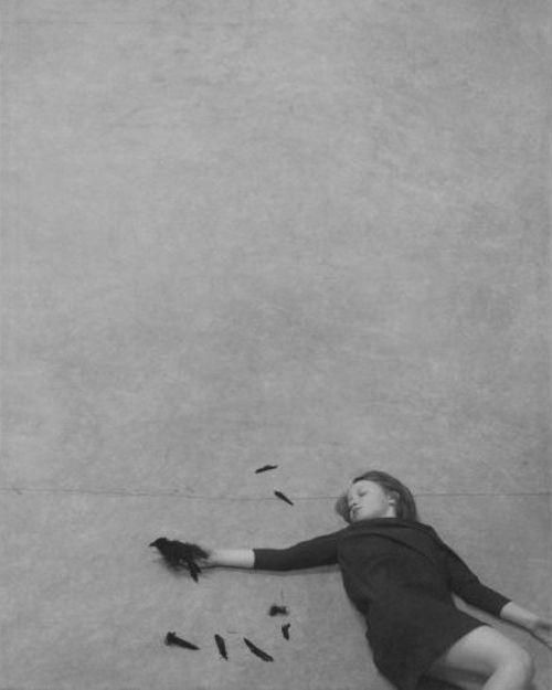 *: Figures Photography, Photography Art, Bw Photography, Robert Parkeharrison, Feathers, Shana Parkeharrison, Birds, Finest Photography, Photography Inspiration