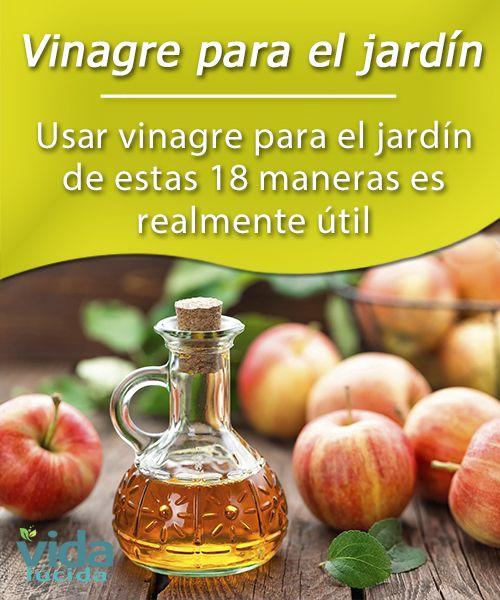 1552 mejores im genes de remedios caseros para limpiar en for El vinagre desinfecta