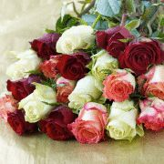Simply 20 Classic Roses £22.99
