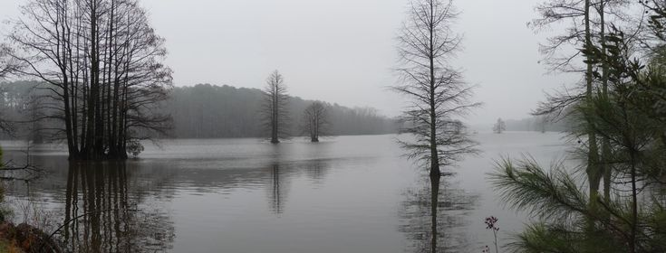 Virginia Beach, VA : Fog on Stumpy Lake, Virginia Beach, Virginia