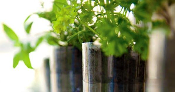 DIY upcycled plastic bottle herb planter eco