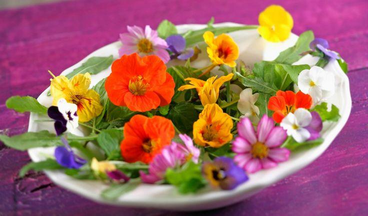 Zdobí zahrádky, louky i lesní mýtiny. Při každé procházce do přírody si můžete donést do kuchyně květy, listy nebo plody, které jsou jedlé a dodají vašim pokrmům nevšední krásu i zajímavou chuť.