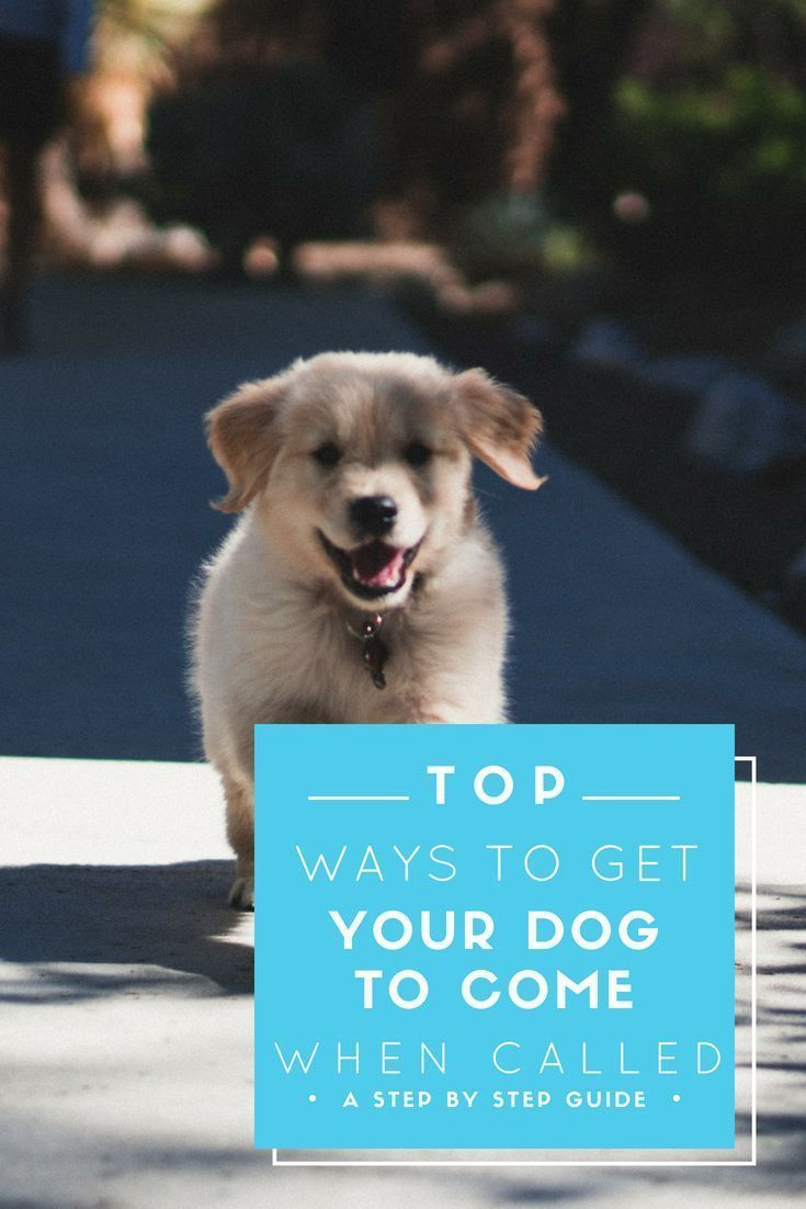 Recall Dog Training Getting Your Dog To Come When You Call Via