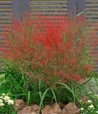 85 Winterharte immergrüne Pflanzen – Liste und Übersicht