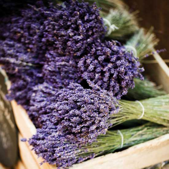Infuse your whole farm with the sweet smell of lavender when you start your own lavender farm.