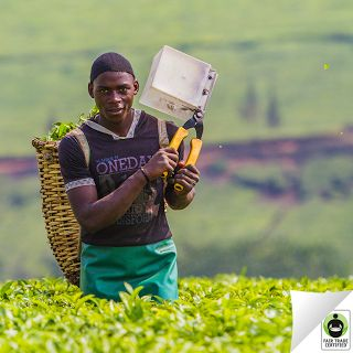 Remember: Behind every cup of #tea, there is a person. Will you treat them fairly? #FairTradePersonalized, Certified Remember, Trade Teas, Cup Of Tea, Cups Of Teas, Trade Certified, Support Fairtrade, Fair Trade, Www Fairtrademarket Com